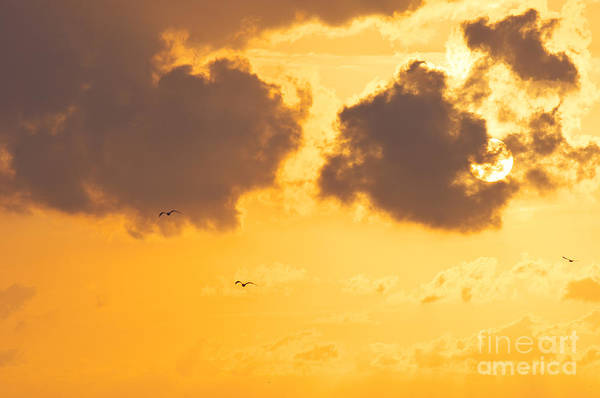 Sky Print featuring the photograph Sunset by Angela Doelling AD DESIGN Photo and PhotoArt