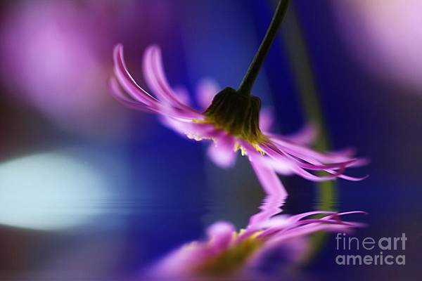 Australia Print featuring the photograph A Stems Debut by Kym Clarke