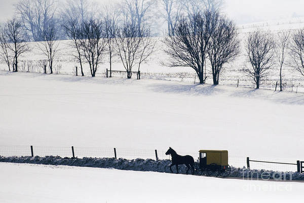 Amish Print featuring the photograph Amish Horse And Buggy In Snowy Landscape by Jeremy Woodhouse