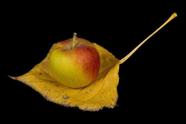 Apple Print featuring the photograph Apple Harvest Autumn Leaf by James BO Insogna