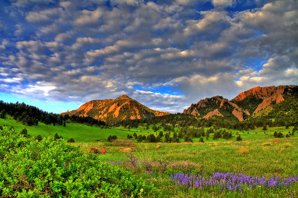 Boulder Print featuring the photograph Boulder Spring Wildflowers by Scott Mahon
