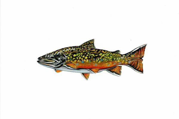 Fish Print featuring the mixed media Brook Trout by Jim Romeo