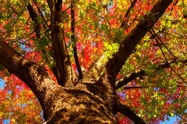 Forest Print featuring the photograph Colorful Autumn Abstract by James BO Insogna