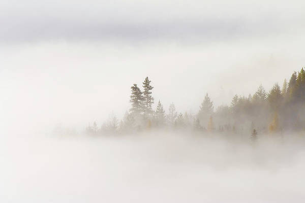 Fog Print featuring the photograph Emergence by Mike Dawson