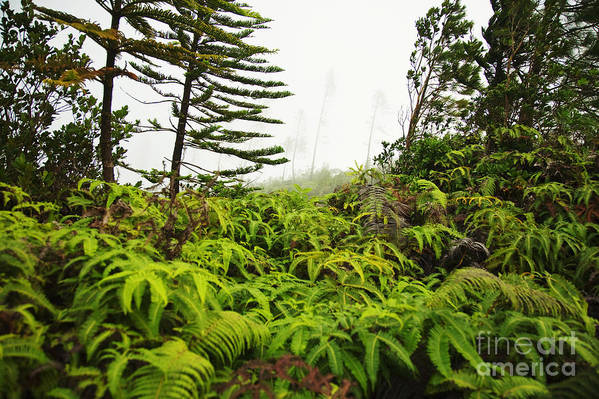 Botanic Print featuring the photograph Fern And Norfolk II by Ron Dahlquist - Printscapes