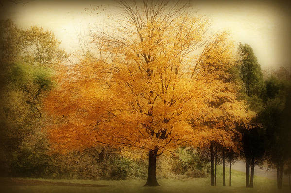 Landscape Print featuring the photograph Golden Tree by Sandy Keeton