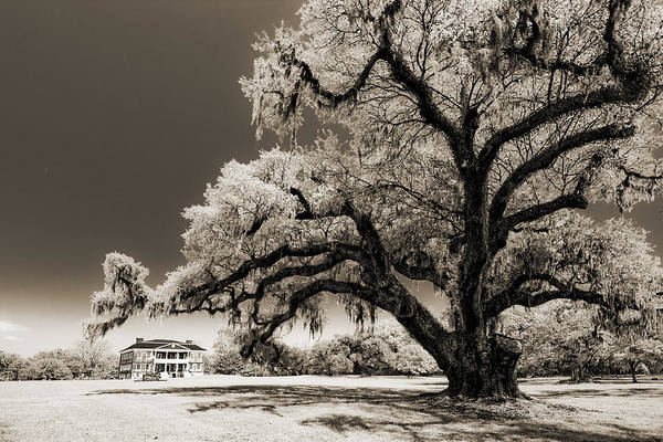 Historic Print featuring the photograph Historic Drayton Hall In Charleston South Carolina Live Oak Tree by Dustin K Ryan