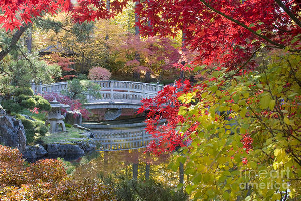 Gardens Print featuring the photograph Japanese Gardens by Idaho Scenic Images Linda Lantzy