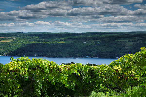 Vines Print featuring the photograph Keuka Vineyard I by Steven Ainsworth