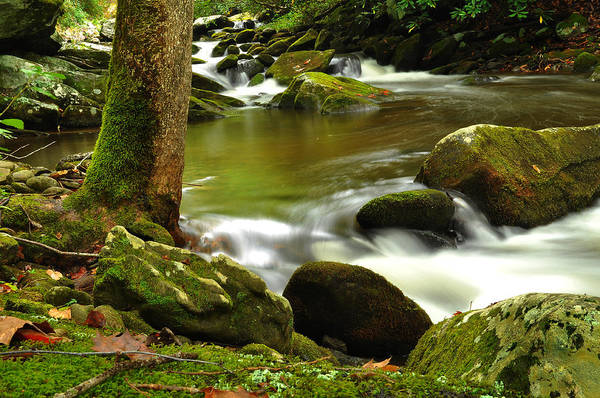 Print featuring the photograph Mountain Stream 2 by William Jones