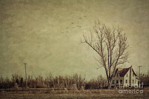 Aged Print featuring the photograph Old Rural Farmhouse With Grunge Feeling by Sandra Cunningham