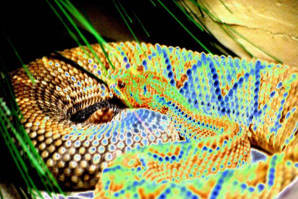 Snake Print featuring the digital art Rattler by Peter McIntosh