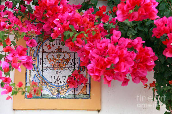 Bougainvilleas Print featuring the photograph Red Bougainvilleas by Gaspar Avila