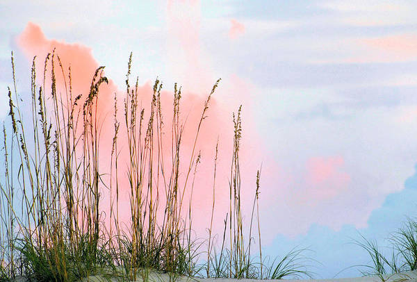 Sea Oats Print featuring the photograph Sea Oats by Kristin Elmquist