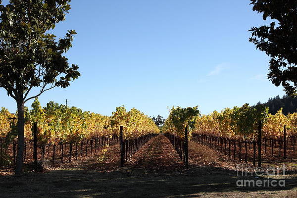 Sonoma Print featuring the photograph Sonoma Vineyards - Sonoma California - 5d19314 by Wingsdomain Art and Photography