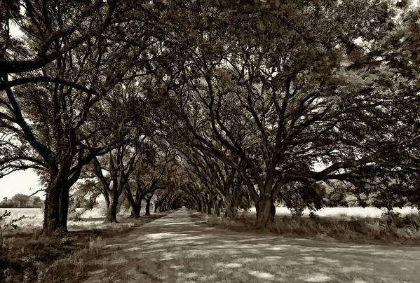 Evergreen Plantation Print featuring the photograph The Deep South Bw by Steve Harrington