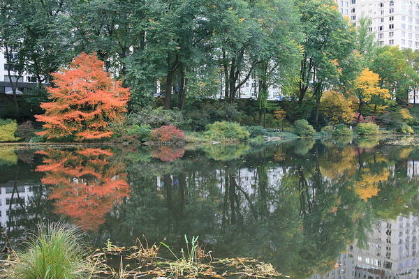Central Park Print featuring the photograph The Pond In Central Park In Fall by Christopher Kirby