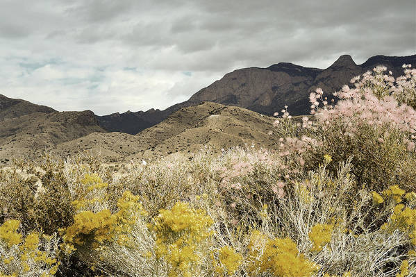 Sandia Mountains Print featuring the photograph Wildflower Mountain by Andrea Hazel Ihlefeld