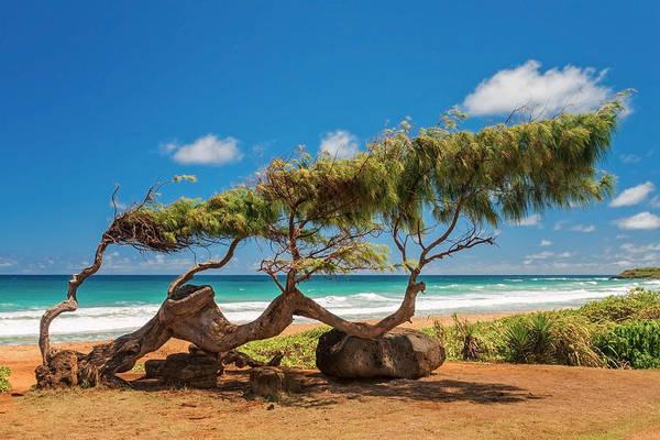 Wind Blown Tree Kapaa Kauai Hawaii Hi Print featuring the photograph Wind Blown Tree by Brian Harig