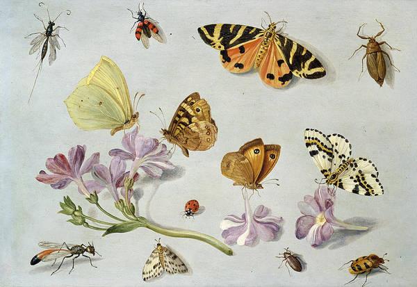 Still Life Print featuring the painting Butterflies by Jan Van Kessel