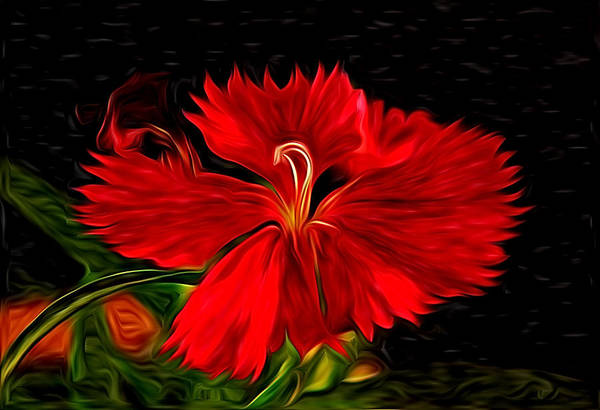 Galaxy Print featuring the photograph Galactic Dianthus by David Kehrli