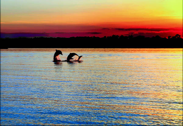 Dolphins Print featuring the photograph Joy Of The Dance by Karen Wiles