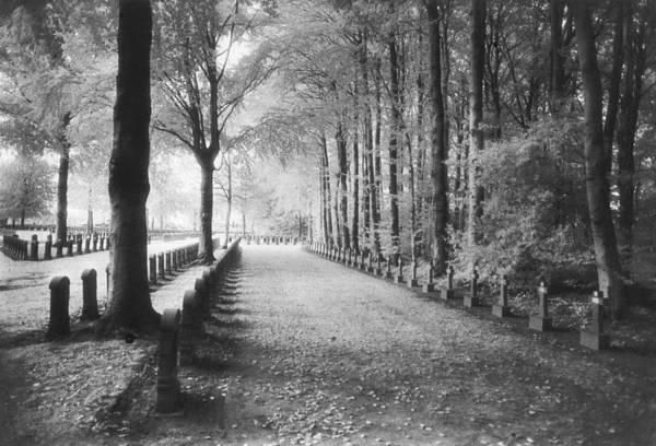 World War I; One; Wwi; Ww1; 1st; First; Great; 1; Wooded; Woods; Wood; Rows; Tombstones; Gravestones; War Tomb Print featuring the photograph Cemetery At Ypres by Simon Marsden