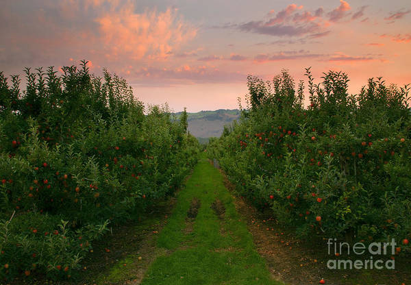 Apple Print featuring the photograph Red Apple Sunset by Mike Dawson