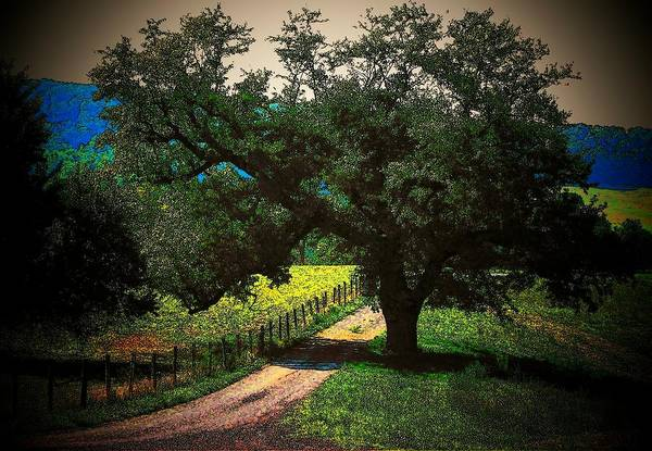 Trees Print featuring the photograph Down The Lane by Joyce Kimble Smith