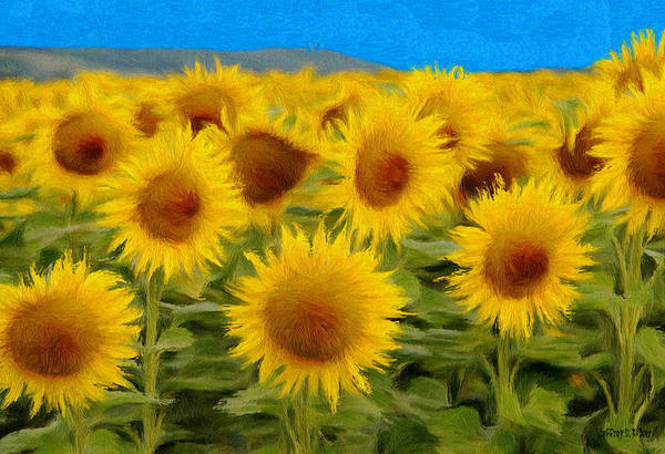Sunflower Print featuring the painting Sunflowers In The Field by Jeff Kolker