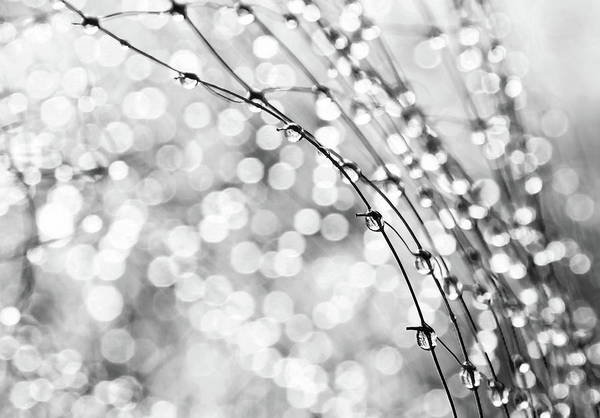 Macro Print featuring the photograph After The Rain by Theresa Tahara