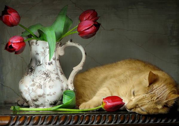 Still Life Print featuring the photograph Sleepy Tulips by Diana Angstadt