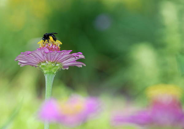 Bee Print featuring the photograph Bee Marks The Spot by Kathy Gibbons