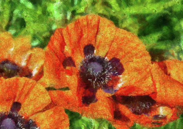 Summer Print featuring the photograph Flower - Poppy - Orange Poppies by Mike Savad