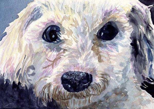 Bichon Frise Print featuring the painting Did You Say Lunch by Sharon E Allen