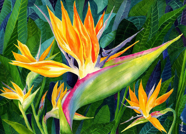 Flower Paintings Print featuring the painting Bird-of-paradise by Janis Grau