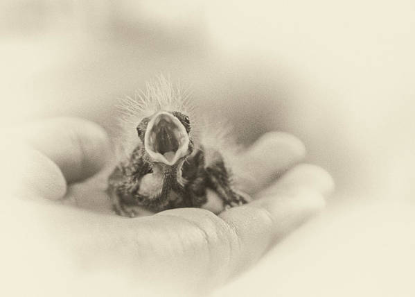 Baby Bird Print featuring the photograph Greed by Caitlyn Grasso