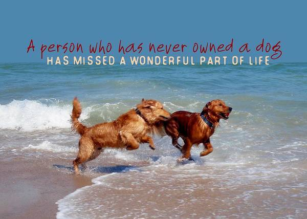 Dog Print featuring the photograph Sheer Joy Quote by JAMART Photography