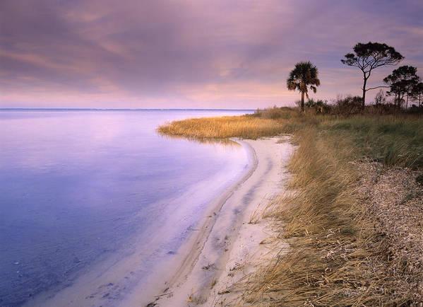 00175930 Print featuring the photograph Beach Along Saint Josephs Bay Florida by Tim Fitzharris