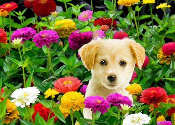 Puppy Print featuring the digital art Golden Puppy In The Zinnias by Bob Nolin
