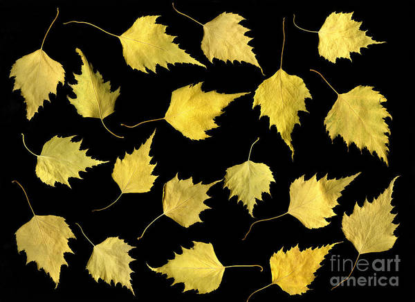 Scanography Print featuring the photograph When Leaves Grow Old by Christian Slanec