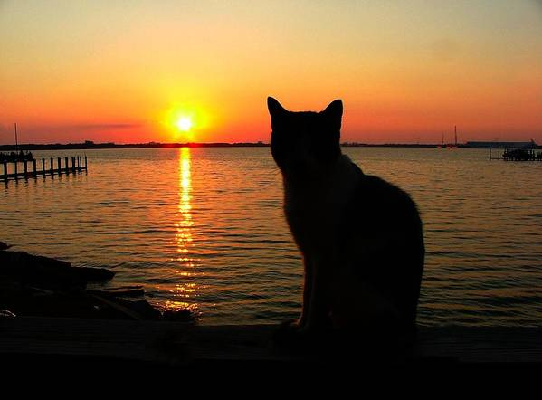 Cats Print featuring the photograph Waiting For The Shrimpers To Come In With Their Catch by Julie Dant