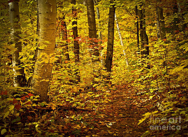 Countryside Print featuring the photograph Fall Forest by Elena Elisseeva