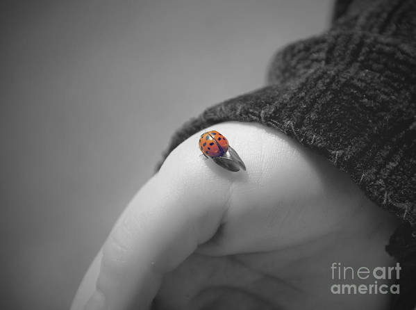 Ladybug Print featuring the photograph Just For A Moment by Aimelle