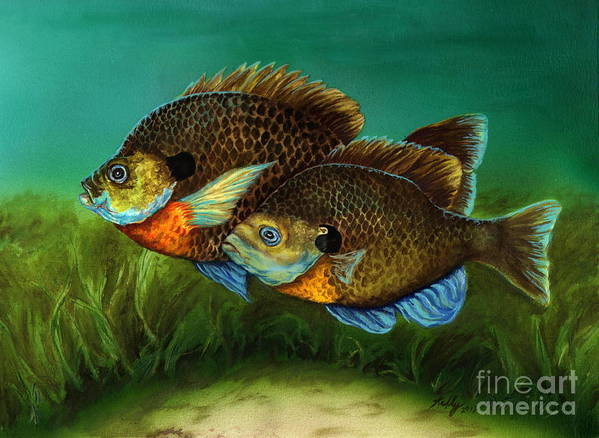 Bluegills Print featuring the painting Pretty Little Panfish by Kathleen Kelly Thompson