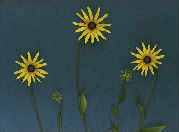 Arranged Print featuring the photograph Three Yellow Flowers by Deddeda