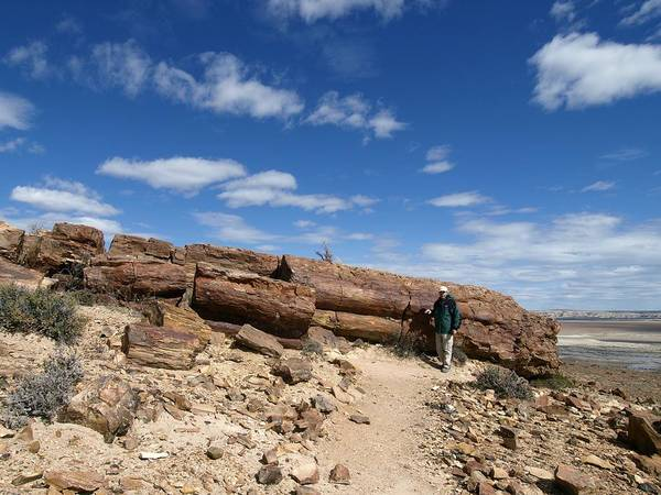 Biological Print featuring the photograph Petrified Forest, Argentina by Science Photo Library