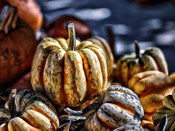 Squash Print featuring the photograph Autumn Glow by Caitlyn Grasso