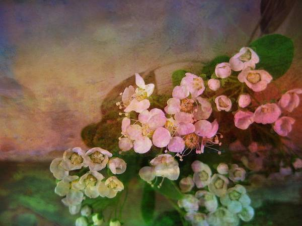 Spirea Print featuring the photograph Bridal Memories by Shirley Sirois