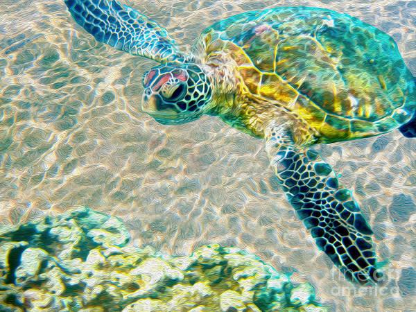 Carribean Mixed Beauty: Beautiful Sea Turtle Print By Jon Neidert